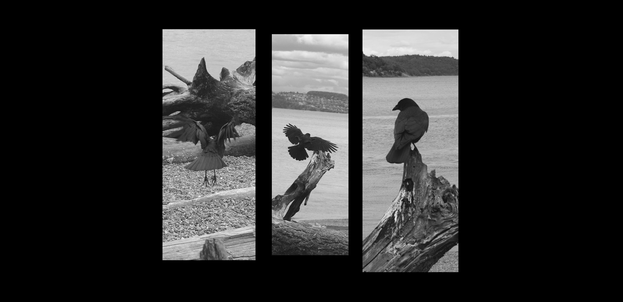 Crows Tryptic
